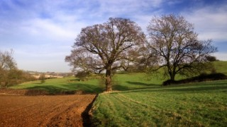 croppedimage645300 Stour Valley in Spring