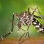 Συνεχίζονται εντατικά οι δράσεις καταπολέμησης των κουνουπιών από την Περιφέρεια Αττικής